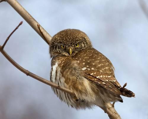 Птицы подмосковья фото и описание