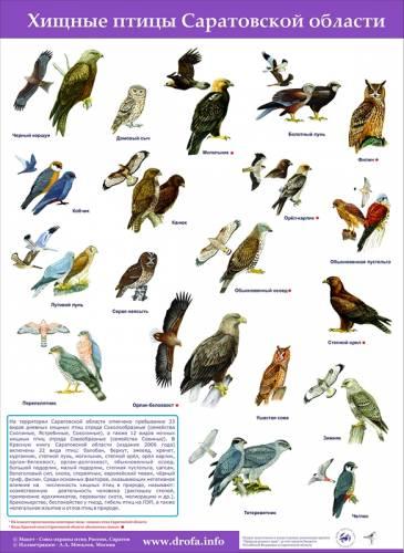 Птицы купить синяя птица лазарева