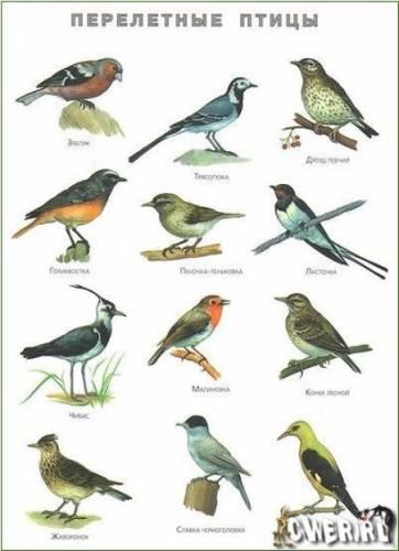 Птицы птицы средней полосы фото